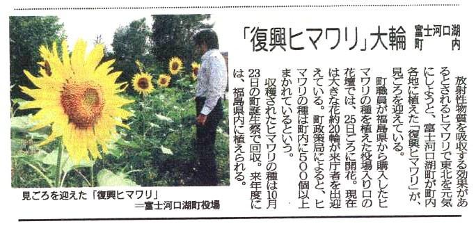 福島ひまわり里親プロジェクト ブログ-山梨県富士河口湖町のひまわり