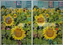 福島ひまわり里親プロジェクト ブログ-セイコーエプソンさま