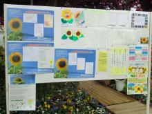 $福島ひまわり里親プロジェクト ブログ-リステル6
