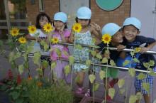 福島ひまわり里親プロジェクト ブログ-金沢市つくしんぼ幼稚園